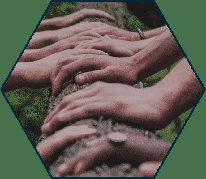 mains sur arbre egologic